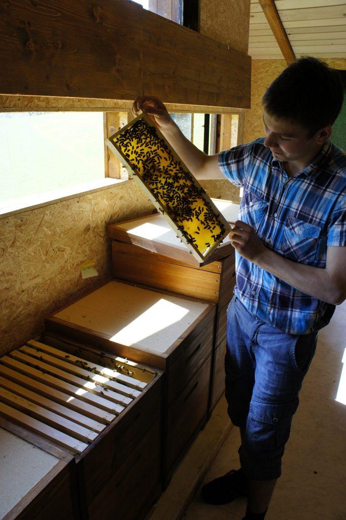 Imker bei Honigkontrolle